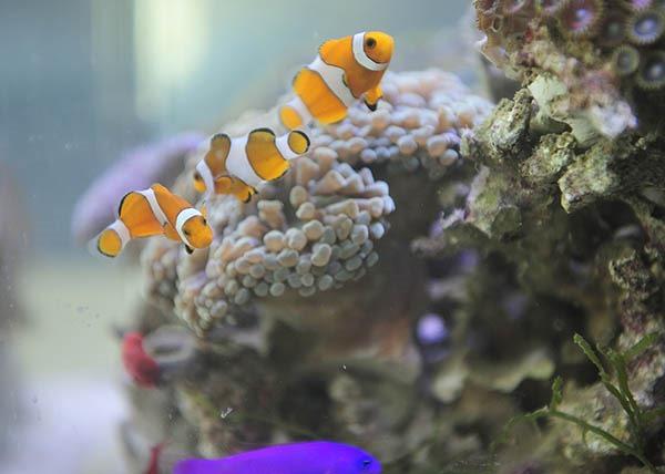 珊瑚和海葵什么的,都可以另买.